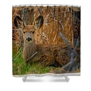 Young Mulie Shower Curtain