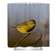 Orangecrowned Warbler Shower Curtain