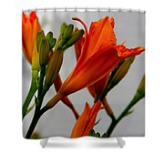 2013 Day Lilies Shower Curtain