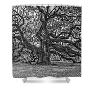 Angel Oak Tree In Black And White Shower Curtain