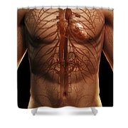 The Cardiovascular System Shower Curtain