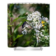 21826 Shower Curtain