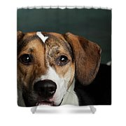 Portrait Of A Mixed Dog Shower Curtain