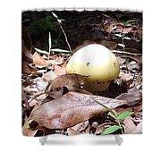 Australia - One Bush Mushroom Shower Curtain