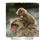 Snow Monkeys Japan Shower Curtain