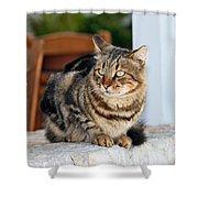 Cat In Hydra Island Shower Curtain