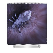 Head Louse Shower Curtain