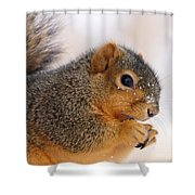 Squirrel  Shower Curtain