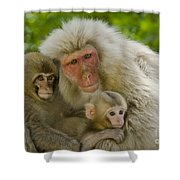 Snow Monkeys, Japan Shower Curtain