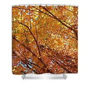 Fall Explosion Of Color Shower Curtain