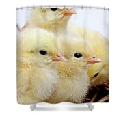 Poussin Shower Curtain
