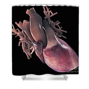 Heart Anatomy Shower Curtain