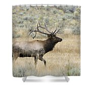 2nd To None Shower Curtain