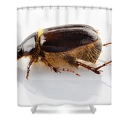 Cockchafer Or June Beetle  Shower Curtain