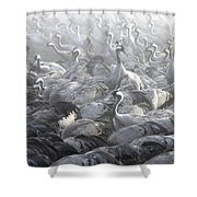 Flock Of Common Crane  Shower Curtain