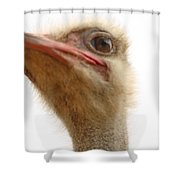 Ostrich Closeup Shower Curtain