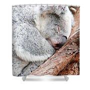 Adorable Koala Bear Taking A Nap Sleeping On A Tree Shower Curtain