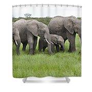 African Elephants Grazing  Kenya Shower Curtain