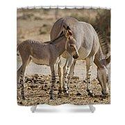 African Wild Ass Equus Africanus Shower Curtain