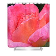After The Rain Series Shower Curtain