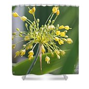 Allium Flavum Or Fireworks Allium Shower Curtain