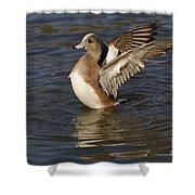 American Widgeon Shower Curtain