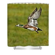 American Wigeon Drake Shower Curtain
