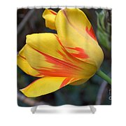 Tulip In The Wind Shower Curtain