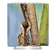 Antlion 31 Shower Curtain