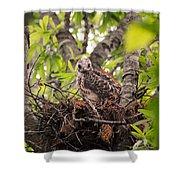 Baby Red Shouldered Hawk In Nest Shower Curtain