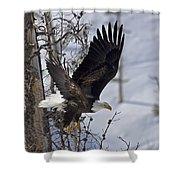 Bald Eagle   #8309 Shower Curtain