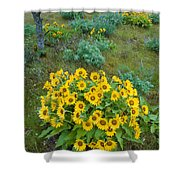 Balsamroot Shower Curtain