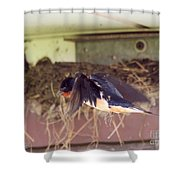 Barn Swallows Constructing Their Nest Shower Curtain by J McCombie
