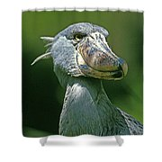 Bec En Sabot Du Nil Balaeniceps Rex Shower Curtain