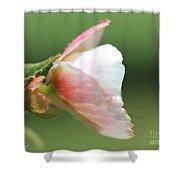 Begonia Named Nonstop Apple Blossom Shower Curtain