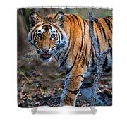 Bengal Tiger Panthera Tigris Tigris Shower Curtain
