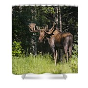 Big Fella Shower Curtain