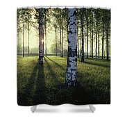 Birch Trees By The Vuoksi River Shower Curtain