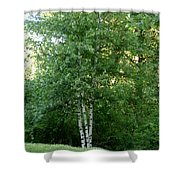 3 Birch Trees On A Hill Shower Curtain
