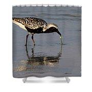 Black-bellied Plover Shower Curtain