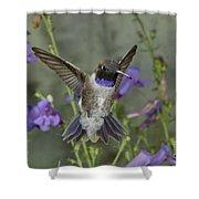 Black-chinned Hummingbird Shower Curtain