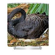 Black Swan At Nest Shower Curtain
