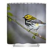 Black Throated Green Warbler Shower Curtain