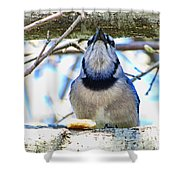 Blue Jay With Bread  Shower Curtain