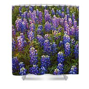 Bluebonnets At Sunset Shower Curtain