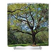 Bok Tower Gardens Oak Tree Shower Curtain