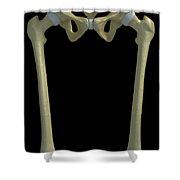 Bones Of The Upper Legs Shower Curtain