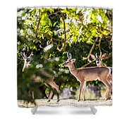 3 Bucks Caught In A Orchard Shower Curtain