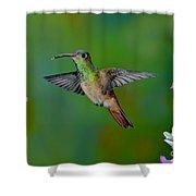 Buff-bellied Hummingbird Shower Curtain