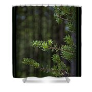 Can't See The Forest Shower Curtain